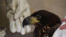 Ptaka uratował leśnik z Nadleśnictwa Czerwony Dwór